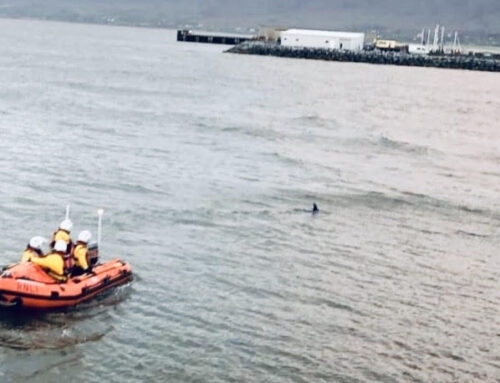 Fenit RNLI Lifeboat guides dolphin out of shallow water to safety!